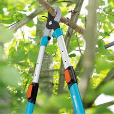 Les différents types de coupe branche